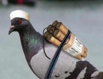 آیا تا کنون کبوتری دیده اید که با بمب خود کشی کند؟. البته از آخوند دوپا همه چیز ساخته است. آخوندها تاکنونب زرگترین مشوق و به وجود آوردنده بمب گذاری و عملیات انتحاری در عراق، افغانستان، اسرائیل، آمریکا، آرژانتین، و مادرید بوده اند.