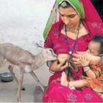 در فرتور بانوی هندی را در حال شیر دادن یه یک آهوی کوچک که مادرش را از دست داده است مشاهده می کنید، باید گفت چه محبت عمیقی بین انسان و حیوان می تواند وجود داشته باشد، ایرانیان نیز باید چون اجداد خویش با حیوانات مهربان باشند.