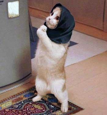 در کشوری که اسلامی شد، نه تنها دانشگاه و تحقیقاتی وجود ندارد، بلکه همه چیز و هم کس در راه خدمت و گوش به فرمان آخوند می باشد. در چنین شرایطی نماز یعنی خم شدن و خوابیدن و ادا درآوردن، و روسری سر کردن مطرح است. در این حال، گربه هم رویسری به سر می کند و عابد می شود، وزیر آموزش ٰعالی آنهم یک نوحه خوان فرصت طلبی به نام  کامران دانشجو خواهد بود.