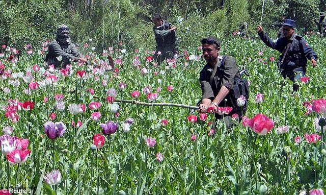 کشت خشخاش در افغانستان که هیچگاه  از سوی آمریکا و انگلیس از وسعت  و گسترش آن جلوگیری نشد، و برعکس از سوی قاچاقچیان،  پاسداران، و سودجایان دیگر مورد تشویق نیز قرار گرفت.