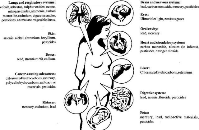 بوییدن و استشمام گازهای سمی روی بیشتر بخش های تن آدمی مانند شش، جگر، قلب، و حتی استخوان می تواند عوارض بسیار ناگواری داشته باشد.