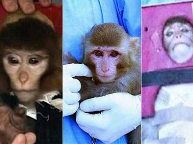 دروغ بزرگ رژیم دروغین و شارلاتانی آخوندی بر فرستادن میمون به فضا و بازگشت سالم آن