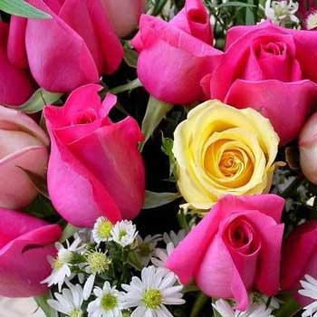 این دسته گل هم پیشکش گروه فضول محله به خوانندگان گرانمایه و ارجمند است که برایشان آرزوی شادی و شادمانی روز والنتاین و دیگر جشن ها و روزهای سال داریم. بنا براین،  روز انسانی بزرگ والنتاین، بر همه شما گرامیان خجسته باد.
