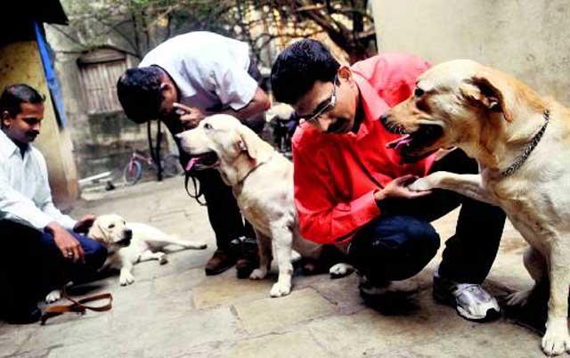 شماری از سگ های آموزش دیده که در خدمت پلیس هندوستانند و می توانند مواد مخدر، مواد بمب گذار و آتش ساز را پیش بینی کنند.