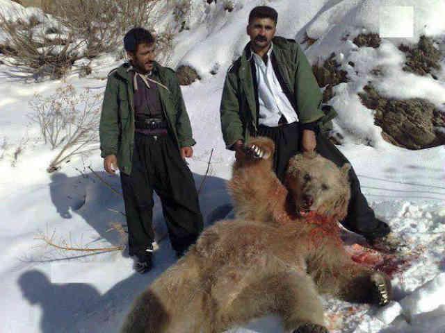 کدام یک جانور وحشی است؟ آن دو که ایستاده اند یا آن بینوایی که در خون غلطیده؟