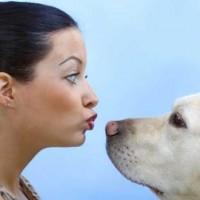 رابطه سگ با انسان، رابطه یک دوست وفادار با یک فرد است. رابطه ای که در آن کینه، بغض، دورویی، و کلک و حقه بازی دیده نمی شود.