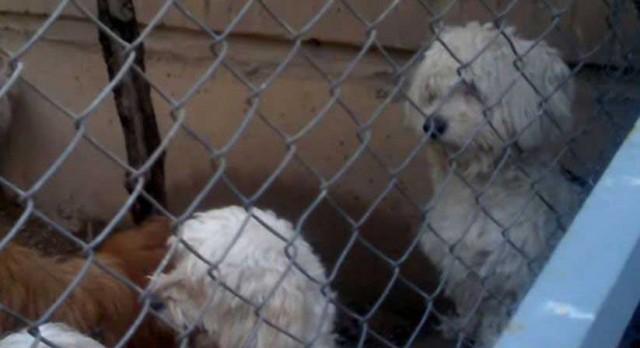 این هم زندان سگ ها در کهریزک است. گویا رژیم اسلامی پس از زندانی کردن و نابودی هزاران ایرانی، حال، به زندانی و نابودی سگ ها می پردازد!. رژیمی که سازنده نیست، بلکه کشنده و ویرانگر است!.