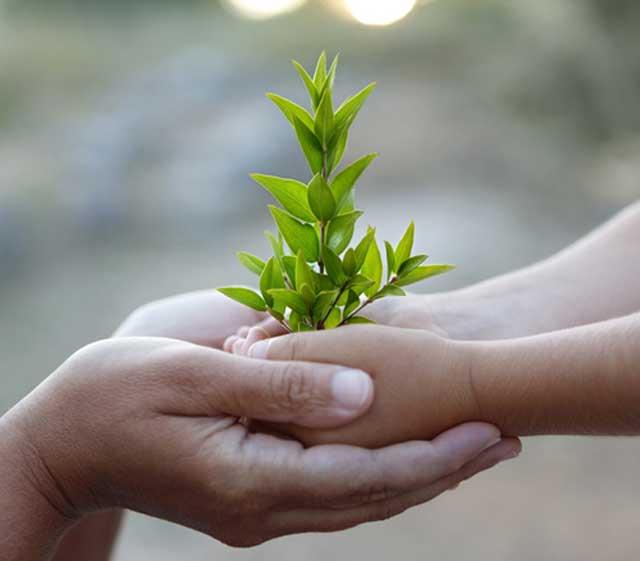 پیشکش و تقدیم گل و برگ سبز، نشانه قدر دانی و سپاسگزاری از خدمات و فداکاری های دیگری است. این یک رسم جهانی است و ما نیز آن را ستایش می کنیم.