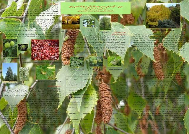 در تصویر بالا، شماری از گیاهان استثنایی باغ گیاه شناسی نوشهر دیده می شود. گیاهانی که از سوی رژیم ضد ایرانی و ضد فرهنگ کمر به قتل آنان بسته شده است.