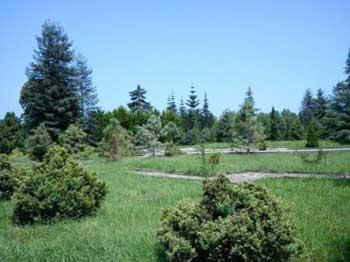 این منظره درون باغ گیاه شناسی نوشهر است که رژیم می خواهد در آن جاده کشی کند و از بین ببرد.