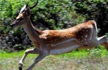 این تصویر شماری از حیوانات وحشی است که در جزایر دریاچه ارومیه وجود داشتند ولی با نابودی دریاچه، آنان نیز از میان خواهند رفت.