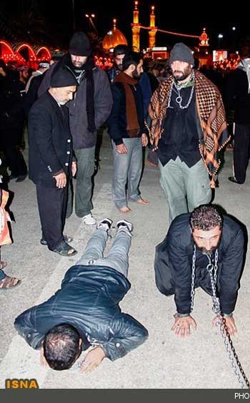 اینها سگ های حسینند. ایرانیانی چند که مگز خود را کرایه داده اند، مانند این جانوران خود را سگ حسین می نامند. به راستی سقوط و فروکس شخصیت و فهم و شعور آدمی تا به کجا؟!.
