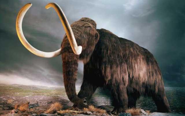 فیل پشمالو یا ماموت که سال ها پیش به دلیل تغییر آب و هوا و شرایط نامساعد طبیعی از روی زمین ناپدید شدند. تنها یک ماموت برف و یخبندان سیبری ۳۹۰۰۰ سال پیش گیر کرد و تا به امروز یخ زده باقی مانده است. این ماموت کشف شده هم اکنون در نمایشگاهی در توکیو در معرز دید همگان است.