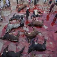 کار اسلام سر بریدن است خواه انسان باشد، خواه گوسفند و یا گاو