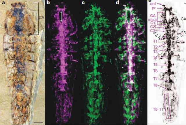 این فرتور فسیل نیم میلیارد ساله به دست آمده را در شرایط مختلف آزمایشگاهی نشان می دهد.