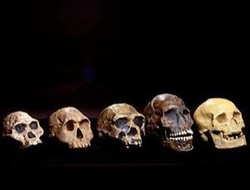 (آیا شباهت ما با فسیلهای بجا مانده اتفاقی است؟ آیا اشتراک ژنتیکی ما هم اتفاق است؟)