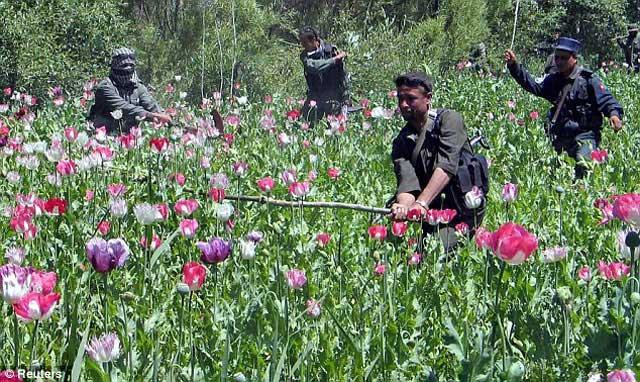 کشت خشخاش در افغانستان که هیچگاه از سوی آمریکا و انگلیس از وسعت و گسترش آن جلوگیری نشد، و برعکس از سوی قاچاقچیان، پاسداران، و سودجویان دیگر مورد تشویق نیز قرار گرفت.