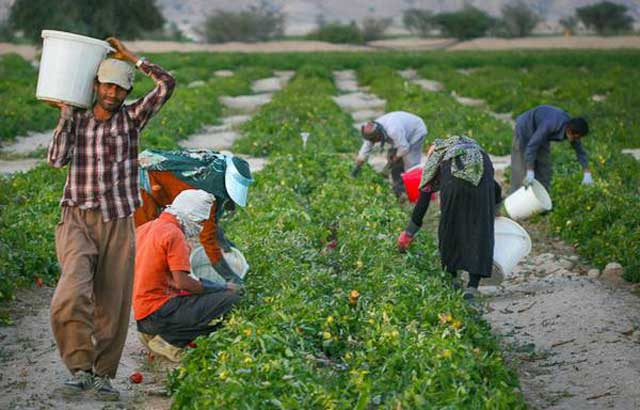 iranian-workers-in-the-field