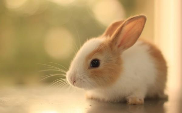 خرگوش مطابق احادیث اسلام زنی است که به شوهر خیانت کرده است و خداوند او را به این شکل مسخ کرده است! این اعتقاد خنده دار برای خرگوش خطرناک است چون ممکن است شما مسلمانان از فردا خرگوش بگیرید و سنگسار کنید!