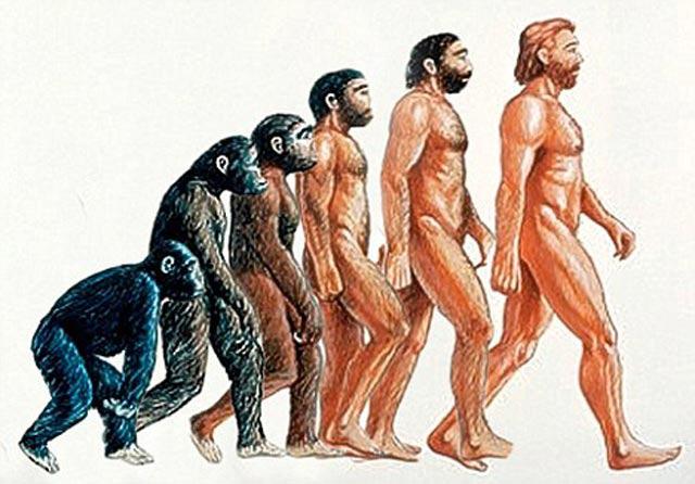 تکامل یا فرگشت که مسیر تغییر تدریجی میمون را در طی قرنها به صورت انسان نشان می دهد. شاید نظریه دکتر مکارتی درست تر باشد که پیوند حاصل از آمیزش شامپانزه و خوک، دارای ویژگی های بیشتری با انسان بوده و انسان اولیه را پایه گذاری نموده است!. (سهراب ارژنگ)