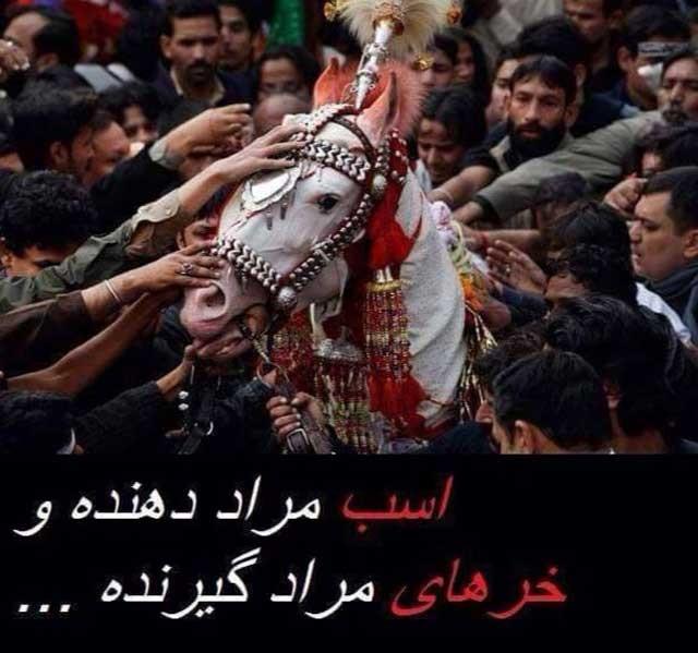 به جهان اسلام خوش آمدید. اسلام، دین بت پرستی، مرده پرستی، و حتی حیوان پرستی است. صد رحمت به هندی های گاو پرست که دست کم بی آزارند و شمشیر انتقام و آدم کشی به کمر نبسته اند.