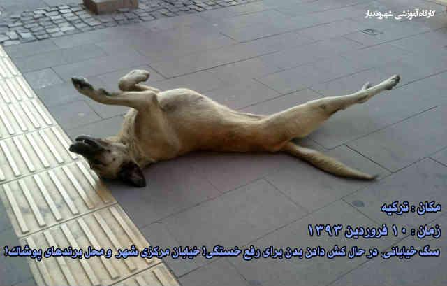 فرتور یک سگ خیابانی را در حال کش و قوس در یکی از خیابان های شلوغ کشور ترکیه نشان می دهد! مردم ترکیه عاشق حیوانات هستند و بسیار به سگ ها و گربه های خیابانی، رسیدگی می نمایند. چرا در ایران سگ ها و گربه های خیابانی را وحشیانه کشتار می کنند؟!