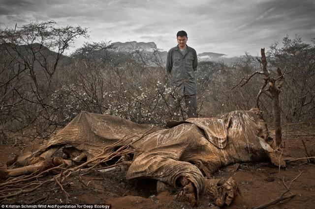 یائو مینگ قهرمان بسکتبال در شما کنیا به لاشه فیلی برخورد می کند که این چنین در طبیعت رها شده.