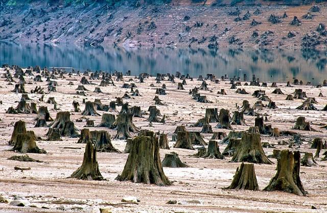 جنگلی که در اورگون آمریکا درخت های آن را بریده اندتا در آنجا یک منبع و ذخیره گاه بزرگ آب بسازند..