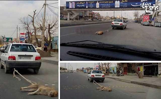 بستن سگ های بی آزار به ماشین ها و با زجر و شکنجه کشتن این حیوانات کاری است که در مشهد انجام گرفته است