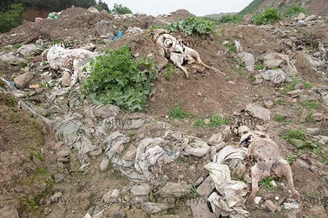اینهم گورستان سگ ها در هزارپیچ گرگان می باشد. آخر کار رژیم جنایت و ایجاد و توسعه گورستان هاست، خواه برای انسان باشد و یا حیوانات. زیرا تنها هدف رژیم کشتن و سپس چال کردن است.
