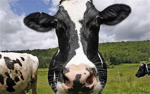 چنانچه مصرف گوشت قرمز خود را به دو قطعه در هفته کاهش دهیم، از تغیر جو و آب و هوای محیط جلوگیری خواهیم کرد.