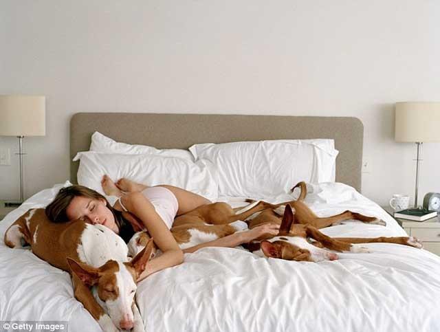 خوابیدن با سگ و فادار خانگی امان به ما آرامش بیشتری می دهدو خواب بدون دغدغه و ناراحتی در پییش خواهیم داشت.