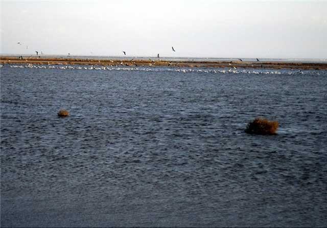 تالاب گاوخونی امروز پس از ایجاد چاهها و بستن سد روی رودخانه ها
