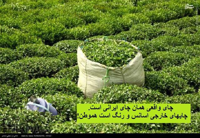lahijan-tea