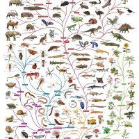 charles-darwin-tree-of-life-poster