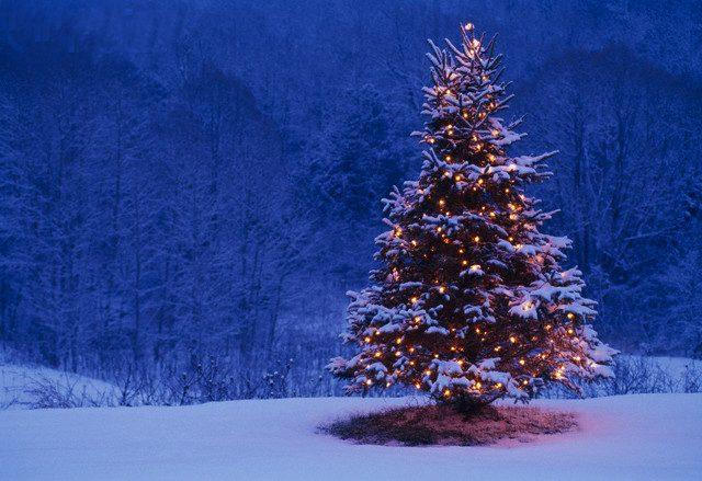 به راستی ایام کریسمس آنهم با درختان پوشیده از برف، و چراغانی آنان چه زیبا و شور انگیز است. صحنه هایی که در هر گوشه و کنار مانند تابلو نقاشی خوش منظر و زیبا و فراموش نشدنی است.
