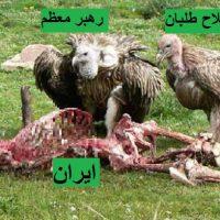 irani-reformists